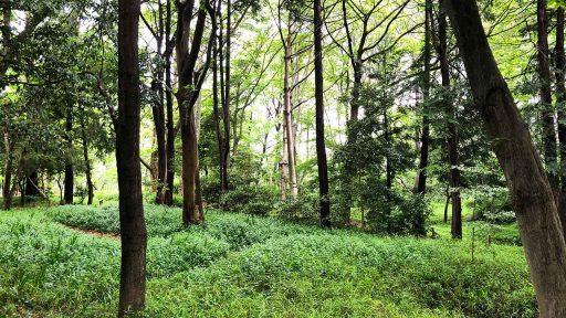 休日に森林公園を歩く